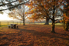 November Autumn Sunlight.. (Adam Swaine) Tags: autumn autumncolours autumnviews beautiful bench sussex sussexlandscape theweald counties countryside seasons canon rural trees sunlight uk ukcounties sheffieldpark nature nationaltrust leaves