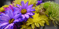 The Search for Color (BKHagar *Kim*) Tags: bkhagar color colorful search discovery found bouquet bright purple yellow flower flowers floral