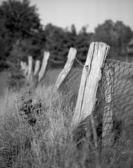 Border (Rosenthal Photography) Tags: treu ff120 asa125 landschaft zaun schwarzweiss anderlingen mamiya7 ilfordfp4 6x7 ilfordlc2912921°c12min mittelformat städte familie 20181003 herbst analog epsonv800 dörfer siedlungen border fence landscape autumn october backyard fields trees mamiya 50mm f45 ilford fp4 fp4plus lc29 129 epson v800