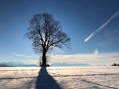 Winter 2019 (Süderenhubel) (Martinus VI) Tags: süderen wachseldorn kanton de canton bern berne berna berner bernese schweiz suisse suiza switzerland svizzera swiss y190119 martinus6 martinus6xy martinus martinusvi