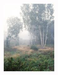 Followers Crop – Velvia 100 (magnus.joensson) Tags: sweden swedish skåne svedala september countryside hasselblad h2 hc80mm hm1632 fuji velvia 100 exp2007 e6 6x45 81a epson v800 scan fog