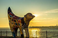 Lambanana (Gary S Bond) Tags: great britain pier head real lancashire united kingdom 2018 a65 alpha city december docks england liverpool merseyside north shabbagaz sony uk waterside west greatbritain pierhead reallancashire unitedkingdom