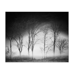 Winter Art-3 (Walk_in_the_woods) Tags: flagstafflake fog maine spring sunrise eustis unitedstates us