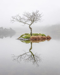 Rydal Tree on Christmas Day, Lake District (MelvinNicholsonPhotography) Tags: lakedistrict rydalwater tree lonetree rydaltree cumbria water