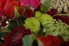 RICOH GR 03 flower macro (HAMACHI!) Tags: flower flowermacro macro tokyo 2019 japan ricoh ricohgriii ricohimaging ricohgr gr gr3 griii loadtest cameratest