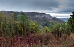 Peak Hill-1-13 (Sheptonian) Tags: somerset rural scenic landscape trees fauna grassland