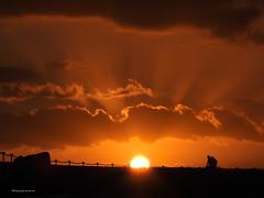 Sunsetdreams (Fini_stern) Tags: sunset dreamy sonnenuntergang ammeer silhouette nature natur naturephotography nikon nikoncoolpix summer summerfeeling