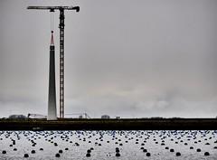 KLiMaatDoeL. (WaRMoezenierr.) Tags: bruinisse zeeland nederland netherlands landscape landschap klimaatdoel klimaatakkoord windmill windmolen bouw constructie grevelingen mossel teelt grey grijs panasonic lumix