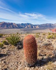 Muffiin Trail HR-5522 (smiller_rrc) Tags: redrock lasvegas muffintrail desert hiking