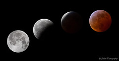 Super Blood Wolf Moon lived up to expectations! (Randy Sellet) Tags: superbloodwolfmoon lunareclipse bloodmoon bloodwolfmoon lunar eclipse totality night outside totaleclipse astronomy astrophotography nasa moon sky nature outdoor composite greenvillesc randysellet randallsellet sellet selletphotography randallhawleysellet randallhsellet abstract