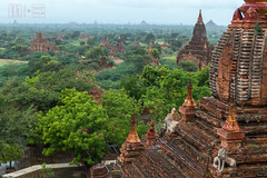 Temple Fields of Bagan (shapeshift) Tags: dhammayazika architecture asia bagan brick burma davidpham davidphamsf landscape mandalay myanmar oldbagan pagan pagodas ruins shapeshift southeastasia temple templescape travel