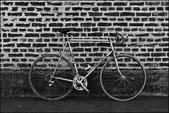 Bertin_SAS_6751 (SAS Photographie) Tags: vélo fahrrad cycle rennrad racebike vélodecourse vélocourse classic vintage bicycle schwarzweiss blackandwhite noiretblanc nikon d610 afs nikkor 2470 28 gimp darktable geeqie