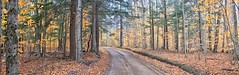 Northern Michigan 2 Track Road. (Steve InMichigan) Tags: panoramic backroad woods woodland woodsview northernmichigan vivitarautowideangle28mmf28txtokinalens fotasyfdfleosmlensadapter