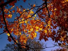 Autumn | Herbst - Großer Garten, Dresden (André-DD) Tags: herbst fall autumn baum tree trees bäume fallfoliage foliage laubfärbung dresden saxony sachsen grosergarten park walk spaziergang