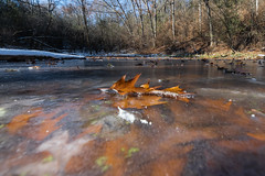 Lapham Delafield Segments Ice Age Trail-31.jpg (NetAgra) Tags: kettlepond waukeshacounty frosty orange color autumn frozen iceagetrail wisconsin leaves cold novermber brown fall oak red
