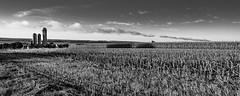 Île d'Orléans, Québec, Canada (Agirard) Tags: farm country landscape field sky bw nb noirblanc blackwhite batis 18mm 2818 2818mm zeiss sony a7ii