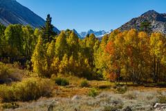 Bishop Creek Fall 2018  9641 (bkies1) Tags: fallcolors fall2018 aspendell aspens easternsierra bishopcreek