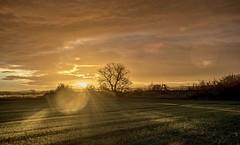 Insomnia hits again..x (shona.2) Tags: scotland gullane earlymorning field sunflare ruins trees sunrise winter cold