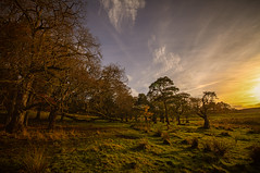 """winter sunset creeping up on the trees - is this the edge of Fangorn forest? fine art, Haddo House & park, Methlick, Aberdeenshire, Scotland (grumpybaldprof) Tags: """"haddohouse"""" gardens park """"williamadam"""" 1732 georgian gordons aberdeenshire scotland """"georgegordon"""" """"1stearlofaberdeen"""" """"lordchancellor"""" """"maternityhospital"""" methlick ellon tarves house chateau """"marquessofaberdeen"""" """"500years"""" """"palladinstyle"""" """"georgehamiltongordon"""" """"4thearlofaberdeen"""" """"britishprimeminister"""" """"1852–1855"""" """"burnofkelly"""" sunset trees lake loch pond water wood forest """"fineart"""" ethereal striking artistic interpretation impressionist stylistic style contrast shadow bright dark black white illuminated colour colours colourful canon 7d """"canon7d"""" sigma 1020 1020mm f456 """"sigma1020mmf456dchsm"""" """"wideangle"""" ultrawide"""