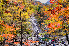 Biryong Pokpo Falls in Seoraksan National Park during autumn (patuffel) Tags: biryongpokpo falls korea south foliage autumn water biryong pokpo leica m10 28mm summicron 20 red yellow leaf leafes flying dragon