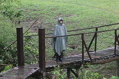 The rainforest doing what it says - one very wet Catherine at Pakitza (Paul Cottis) Tags: manuriver peru amazonbasin rainforest paulcottis 22 september 2018 sept rain wet storm soaked soggy poncho cape catherine