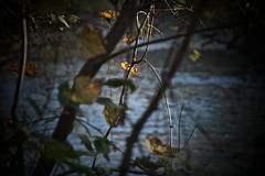 by the river, river's light, 3:3, 10-13-18 (wbhmatthies) Tags: river light flow leaves backlighting passing photopoem