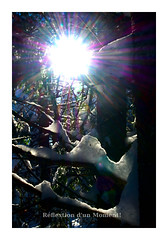 sun and snow (jacqueshervieux) Tags: flare snow winter cold pentax pentaxart