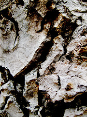 (bekasukhitashvili) Tags: branch tree cracks