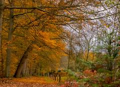 Autumn forest (katrinchen59) Tags: autumn fall autumnforest autumncolors trees nature autumnseason orange naturephotography november forestwalk herbst herbstwald herbstfarben bäume natur herbstseison naturfotografie herbstspaziergang herfst herfstbos herfstkleuren natuur natuurfotografie