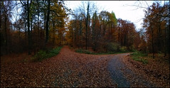 Day 315 (kostolany244) Tags: 3652018 onemonth2018 november day315 11112018 samsunggalaxys5 europe germany geo:country=germany month panorama woods path 365the2018edition