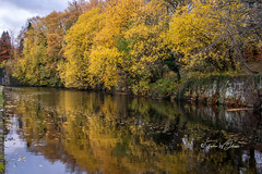 SJ1_3279 - Leeds-Liverpool Canal, Burnley (SWJuk) Tags: burnley england unitedkingdom swjuk uk gb britain lancashire home canal leedsliverpoolcanal water flat calm reflections trees leaves foliage towpath sky bluesky clouds 2018 nov2018 autumn autumnal autumncolours nikon d7200 nikond7200 nikkor1755mmf28 rawnef lightroomclassiccc