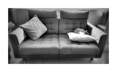 Cat Nap ! (CJS*64) Tags: cat sleep rest resting doingnothing settee chair couch blackwhite bw blackandwhite whiteblack whiteandblack mono monochrome grey greys cushion panasonic panasoniclx100 lx100 wide wideangle pet