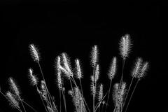Folies flores-2-1 (Merlin H.) Tags: alsace hautrhin mulhouse fleur flowers foliesflores