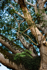 20181112_Mexico_DSC_1241 (keeswoestenenk2) Tags: 2018 belize boom jaar natuur plaats