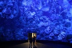Great Barrier Reef (Wackelaugen) Tags: gasometer pforzheim germany europe 360° panorama 360°panorama asisi yadegar yadegarasisi underwater greatbarrierreef korallelriff australia coralreef canon eos photo photography stephan wackelaugen