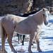 Wild Colorado Horse