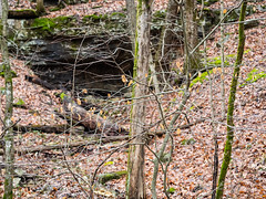 IMGPJ48000_Fk - Horseman Hide-A-Way Spring Cave (David L. Black) Tags: corydon indiana unitedstates us cave olympusomdem1mkii olympus1240f28