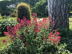 bouquet-jardin© (alexandrarougeron) Tags: photo alexandra rougeron flickr fleurs nature plante végétal végétale ville beauté couleur frais