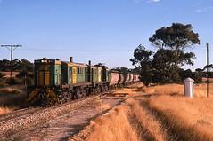 Pearlah of a shot (Bingley Hall) Tags: rail railway railroad transport train transportation trainspotting locomotive engine australia southaustralia diesel pearlah eyrepeninsula australiannational an 1067mm grain alco dl531 251b aegoodwin railpage:livery=10 842 railpage:class=33 railpage:loco=842 rpausa830 rpausa830842