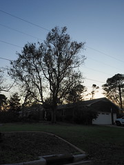 P9190747 (photos-by-sherm) Tags: hurricane florence recovery trees debris chain saws cutting wilmington nc north carolina coast fall