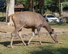 53534-Khao-Yai (xiquinhosilva) Tags: 2017 dongphayayen hintung khaoyai mueangnakhonnayokdistrict nationalpark park thailand unescoworldheritage tambonhintung changwatnakhonnayok th