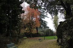 Autumn (giovanni_vaccaro) Tags: autunno autumn parco park foglie alberi tree trees bench panchine viale atmosfera milano milan umidità parcosempione italia italy colori colors canon canon1855 canon1300d lombardia picture foto