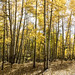 Fall in the San Juan Mountains of Conejos County, Colorado, near the New Mexico border - Original image from Carol M. Highsmith's America, Library of Congress collection. Digitally enhanced by rawpixel.