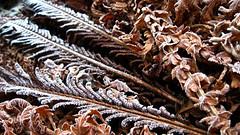 Frost on the leaves of a fern. (ALEKSANDR RYBAK) Tags: иней листья папоротник узор роспись замёрзший холод мороз макро крупный план frost leaves fern pattern painting frozen cold macro closeup