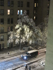 2018 November Evening Blizzard Snow Tree - Front Yard 5101 (Brechtbug) Tags: 2018 november evening blizzard snow storm front yard hells kitchen clinton near times square broadway nyc 11152018 new york city midtown manhattan snowing storms snowstorm winter weather building fog like foggy hell s nemo southern view ny1snow