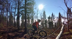 Forest Climb (29in.CH) Tags: fall autumn fatbike ride 16112018
