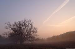 Misty tree (damianziel) Tags: pentax autumn fall landscape landschaft poland polska poznań paysage mist misty scenery sun sunlight sunrise bluehour field fog digital smc smcpda1855mmf3556alwr kitlens europe ciel