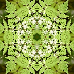 Kaleido Abstract 1936 (Lostash) Tags: art photography edited abstract kaleidoscopes patterns shapes symmetry