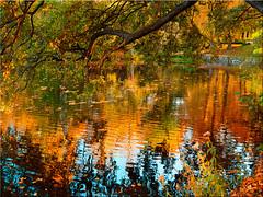 Autumnal reflections on the lake (Ostseetroll) Tags: deu deutschland eutin eutinerschlosspark geo:lat=5413631904 geo:lon=1062107210 geotagged schleswigholstein autumn reflections lake herbst spiegelungen see olympus em5markii