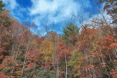 Cherokee National Forest 434 (Steve4343) Tags: steve4343 nikon 7200 appalachian trail cherokee national forest red green blue yellow orange white clouds sky beautiful tennessee autumn beauty johnson county lake watauga cloud colorful woods garden gardens happy leaves rocks wildlife landscape mountain tree trees grass water wood butler summer spring macro flower flowers at 434